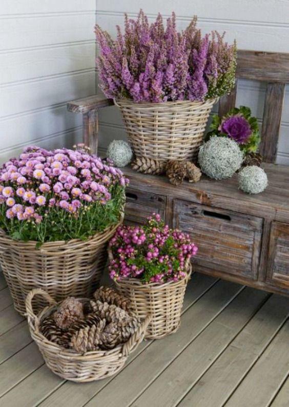 Plantes exterieures